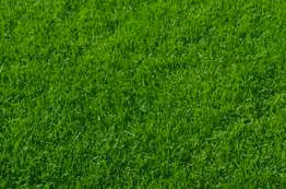 REQUEST A QUOTEGet in touch for a competitive lawncare quote.