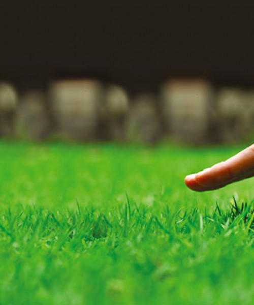 Your Lawn provide professional lawncare services for less than the price of doing it yourself.